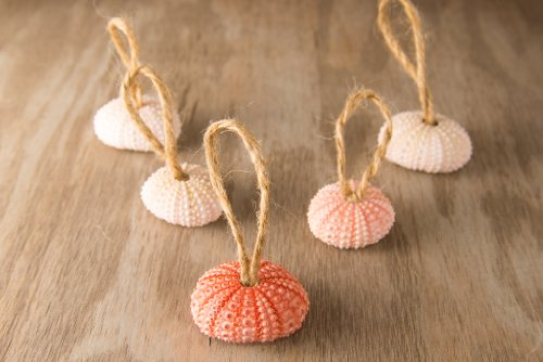 Hinterland Trading Christmas Pink Sea Urchin Ornaments Set