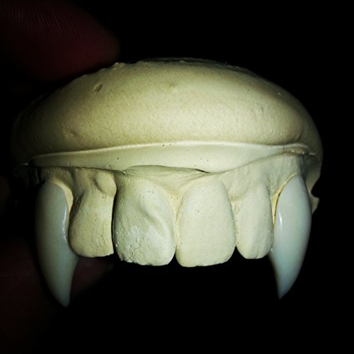 Custom Vampire Fangs Fit to Your Teeth Movie Quality Vampire Costume