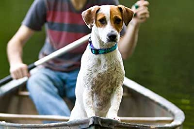 Lupine 3/4-inch Rain Song Adjustable Dog Collar