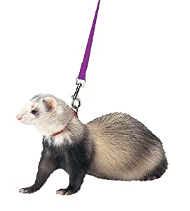 Marshall Ferret Harness and Lead, Purple