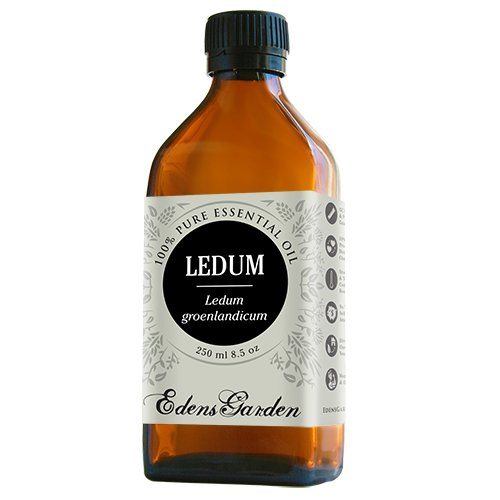 Ledum 100% Pure Therapeutic Grade Essential Oil by Edens Garden- 250 ml