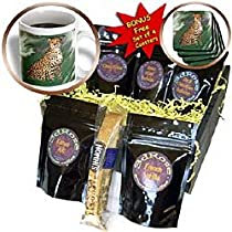 Wild animals - Cheetah - Coffee Gift Baskets - Coffee Gift Basket