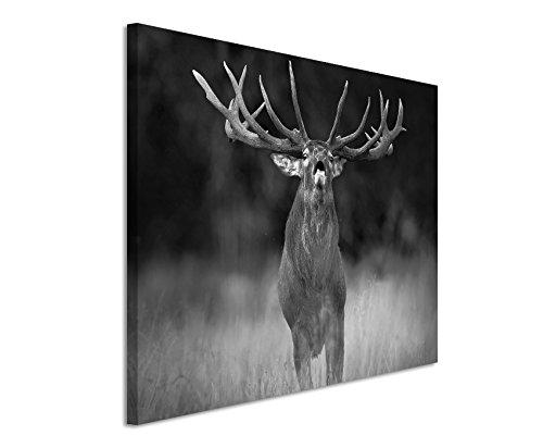 50x70cm Leinwandbild schwarz weiß in Topqualität Tier Hirsch Wald Dyrehave Dänemark