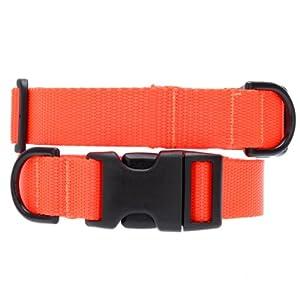 Max & Zoey 3/4-Inch Wide Basic Dog Collar, X-Small, Bright Orange