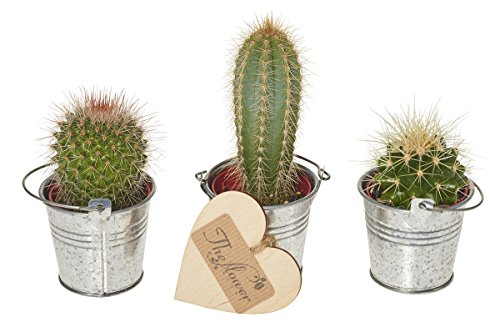 the-flower-rooms-cactus-selection-gift-set