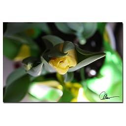 Trademark Fine Art Tulips II by Martha Guerra Canvas Wall Art, 16x24-Inch