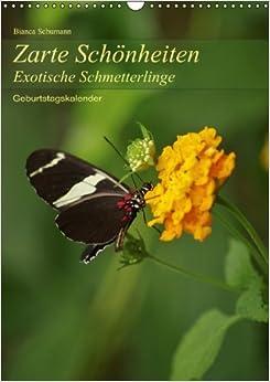 Zarte Schönheiten Exotische Schmetterlinge