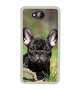 Cute Dog 2D Hard Polycarbonate Designer Back Case Cover for Micromax Canvas Play Q355