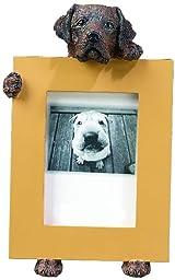 Chocolate Labrador Retriever 2.5\
