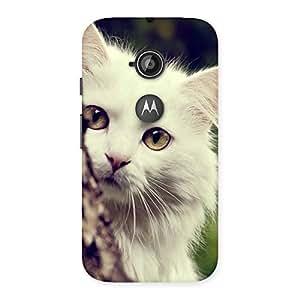 Ajay Enterprises Fill Hiding Cat Multicolor Back Case Cover for Moto E 2nd Gen