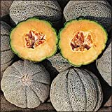 MELON - CANTALOUPE - HEARTS OF GOLD - 100 SEEDS