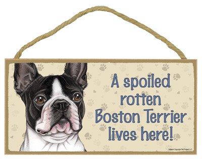 A spoiled rotten Boston J 'n L Boston Terriers