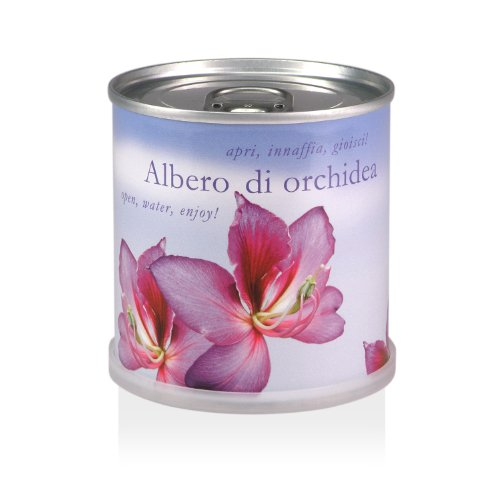 extragifts-fiori-in-lattina-albero-di-orchidea-bauhinia-purpurea