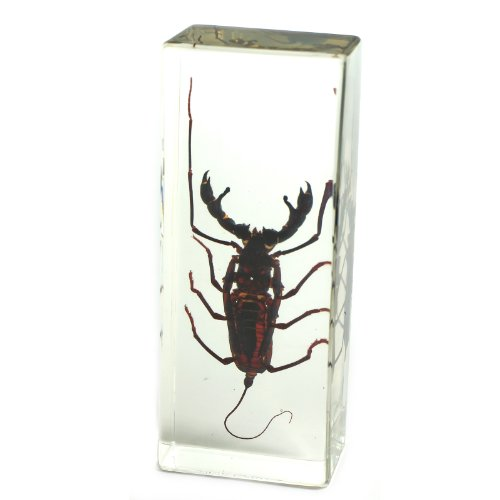 whip-scorpion-paperweight-44x16x11
