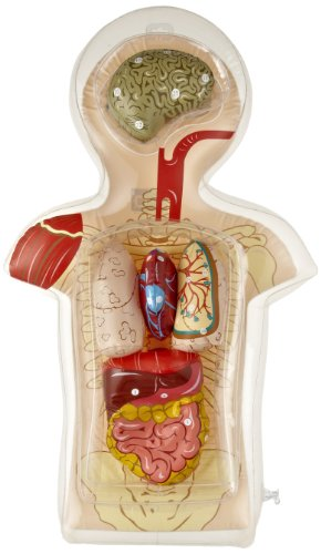 American Educational Inflatable Torso Model (Digestive System Model compare prices)