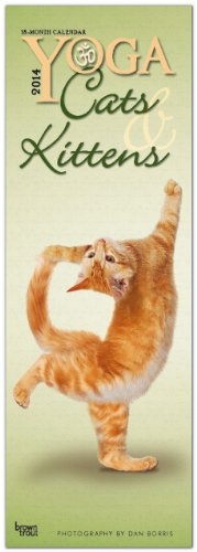 Yoga Cats & Kittens 2014 Slim Calendar