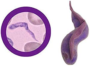 Giant Microbes Sleeping Sickness Trypanosoma brucei Plush Toy