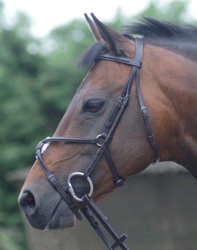 Westminster Trense für Pferde mit Zügeln (FULL)