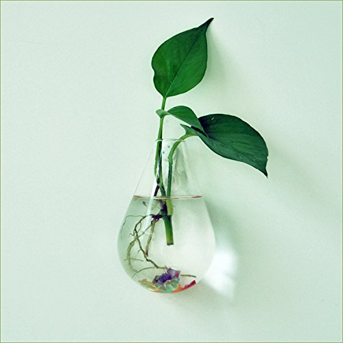 pared-de-vidrio-forma-de-gota-de-agua-de-flores-colgando-decoracion-botella-planta-de-maceta-en-casa