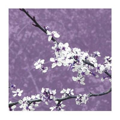 Blossom in Lilac by Gail Mckenzie