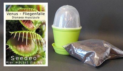 seedeo-kit-de-culture-de-venus-attrape-mouche-dionee-attrape-mouche-dionaea-muscipula