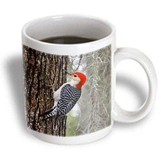 Danita Delimont - Birds - Red-Bellied Woodpecker Bird, Male On Oak Tree - Us44 Ldi0528 - Larry Ditto - 11Oz Mug (Mug_146668_1)