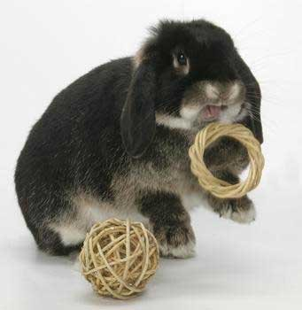 Peter's Rabbit and Small Animal Chew Ring