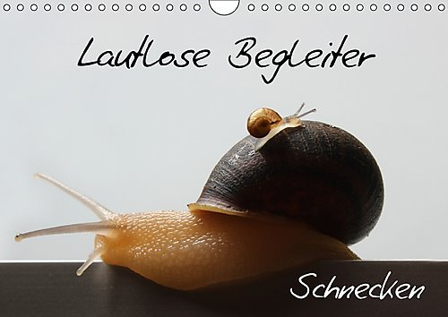lautlose-begleiter-schnecken-wandkalender-2017-din-a4-quer-lautlose-begleiter-schnecken-monatskalend