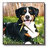 Appenzeller Mountain Dog - 10x10 Wall Clock