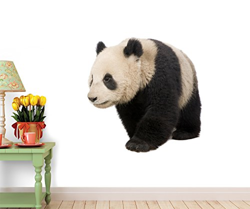 Giant Panda (18 Months) - Ailuropoda Melanoleuca Wall Decal - 52 Inches W X 45 Inches H - Peel And Stick Removable Graphic front-666460