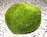 3 Mooskugeln mini 2-3 cm