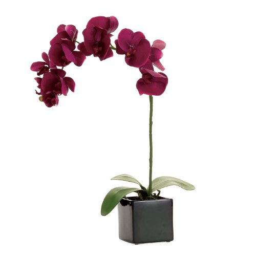Torre & Tagus 901645A Orchid Potted Single Stem, 28-Inch, Burgundy