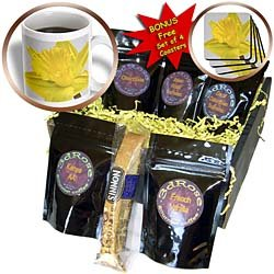 Danita Delimont - Flowers - Yellow daffodil flower - NA01 JWI0006 - Jamie & Judy Wild - Coffee Gift Baskets - Coffee Gift Basket