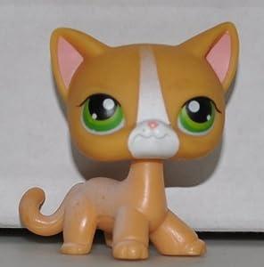 Shorthair Cat #72 (Orange, Green Eyes, White Stripe on Nose) Littlest