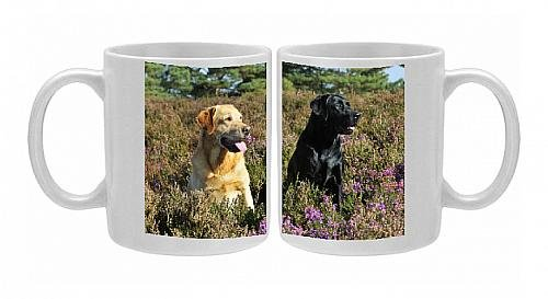 Photo Mug Of Jd-21175 Dog. Yellow Labrador Sitting Next To Black Labrador From Ardea Wildlife Pets front-569607