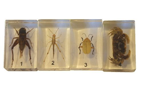 Bug Specimens (Cricket, Locust, Yellow Leaf Beetle, Crab)