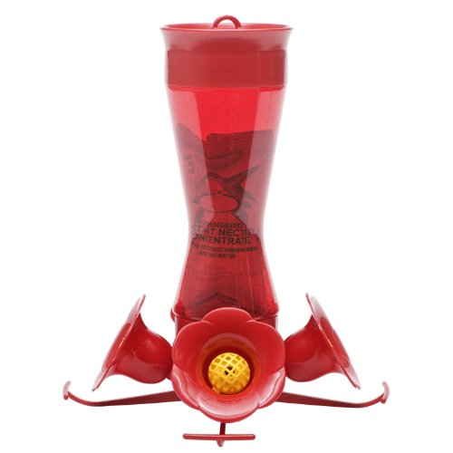 Make Butterfly Feeder front-1034465