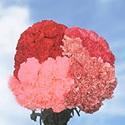 300 Fresh Cut Valentine\'s Carnations | Fresh Flowers Express Delivery | Perfect Valentine\'s Day Gift
