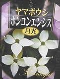 常緑ヤマボウシ ホンコンエンシス月光・80