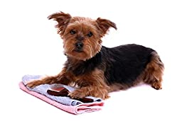 Wallmonkeys WM300647 Lying Dog Yorkshire with Towel and Brush Peel and Stick Wall Decals (18 in W x 12 in H)