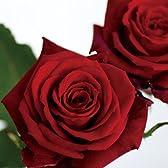 【バラの花束】生花 30本 名古屋県産 オスカー メッセージカード