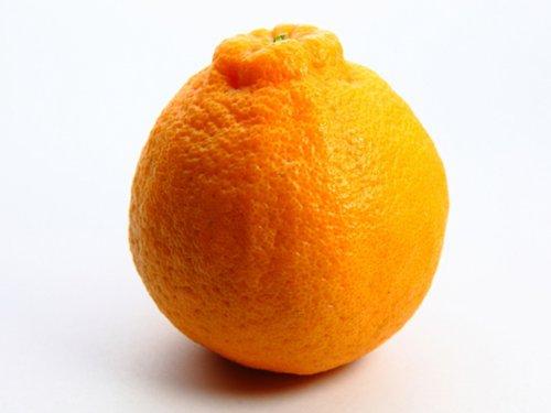 【6か月枯れ保証】【春・夏に収穫する果樹】オレンジ/早生デコポン 15cmポット