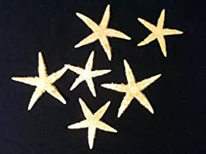 Maritime Deko 3 x Seestern flach 6-10 cm