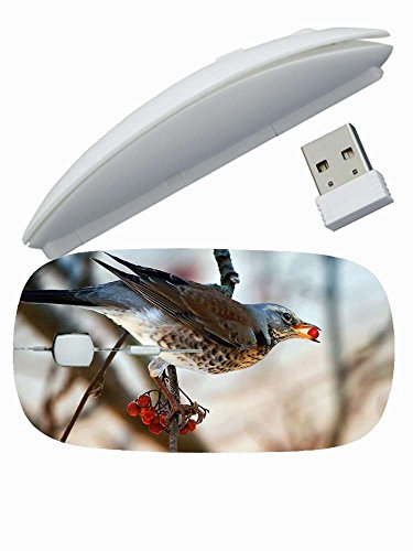 Protection Customized Series ( Animals bird blackbird branch rowan food wood ) Gaming Mouse Wireless Mice Good For Men's 2.4 GHz -3 Adjustable DPI Levels - Nano USB wireless receiver (SB-W-3774) (Blackbird Food Co compare prices)