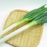鳥取・他県産 白葱 (300g*10束)1箱3kg