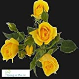 40 Stems of Yellow Spray Roses, Buy 20, Get 20 FREE. Order by May 5th at 10:30am Eastern for On-time Mother's Day Delivery