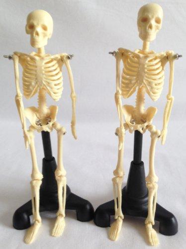 ハロウィン インテリア 用 のマストアイテム 1/8スケール 人体 骨格 模型 ( 2体セット )