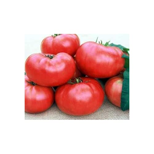 marianna 39 s peace tomato 20 seeds beefsteak vegetable plants patio lawn. Black Bedroom Furniture Sets. Home Design Ideas