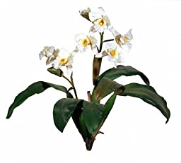 Renaissance 2000 Orchid Plant, 21.5-Inch, Cream Yellow