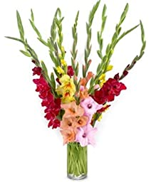 From You Flowers - Stunning Rainbow Gladiolus - 12 Stems (Free Vase Included)